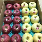 天童市の王将リンゴ金将リンゴ