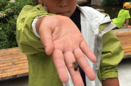 カエル捕まえた